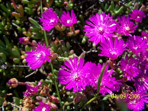 The Meerkat Magic Valley Reserve plant species flora 65.JPG