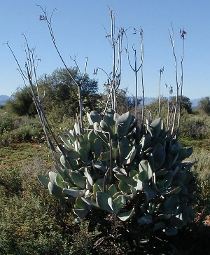 The Meerkat Magic Valley Reserve plant species flora 73.jpg