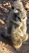 All The Meerkat Magic Conservation Project Meerkat Friendly Conservation Supporters and Meerkat Veterans who visited in 2008.