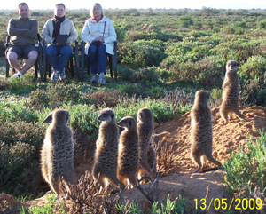 Special guests - meerkat veterans watching wild meerkats / suricates from The Ungulungu meerkat / suricate group on their unique in the world tour at The Meerkat Magic Conservation Project in The Meerkat Magic Valley in Oudtshoorn, Western Cape of South Africa.